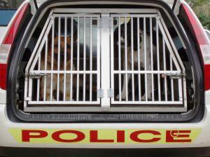 617050_police_dogs.jpg